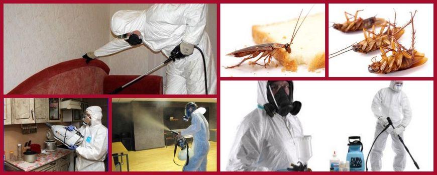 выведение тараканов с гарантией