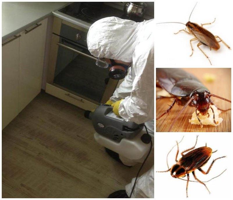 травить тараканов в москве