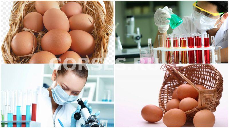 анализ яиц