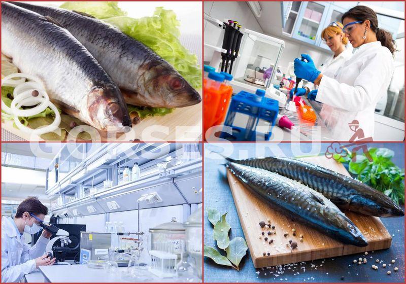 исследование рыбы