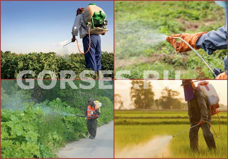 обработка участка гербицидами цена