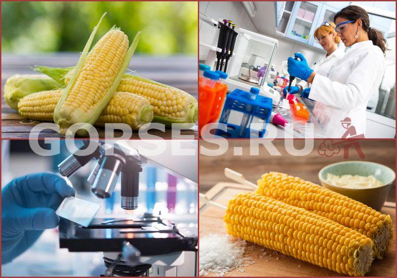 Исследование кукурузы