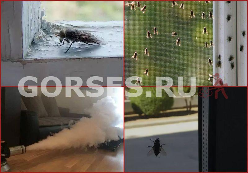 Избавиться от мух в доме