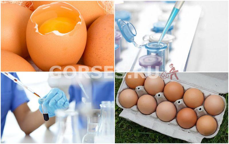 экспертиза яиц
