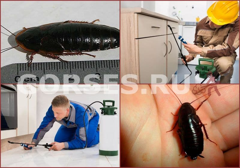 канализационные тараканы