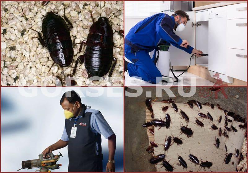 канализационные тараканы в квартире