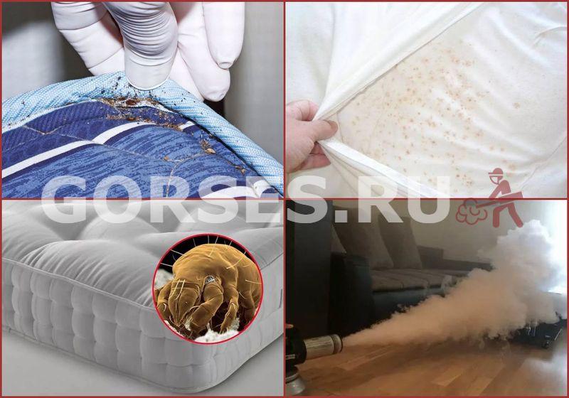 кроватные клопы