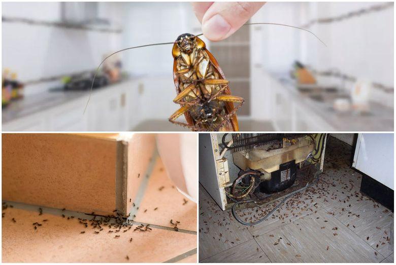 обработка от насекомых в квартире