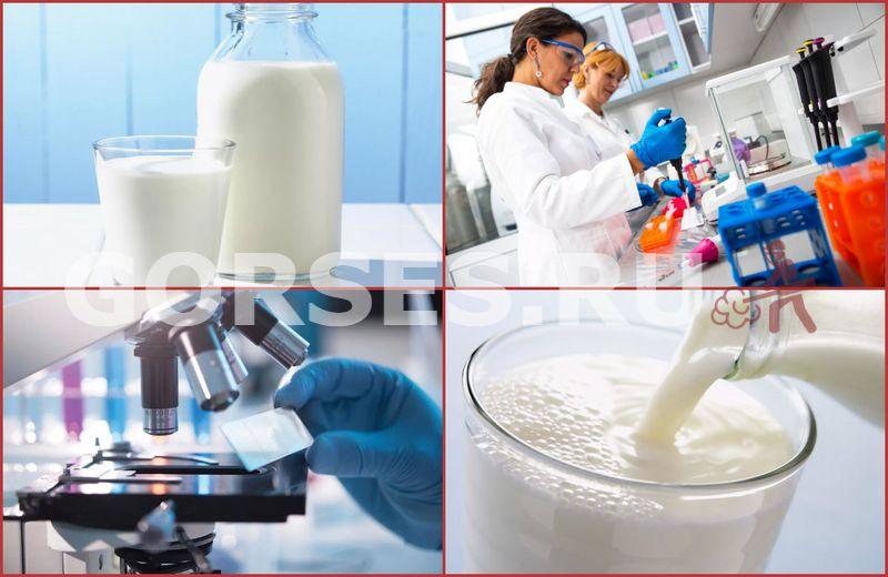 микробиологический анализ молока