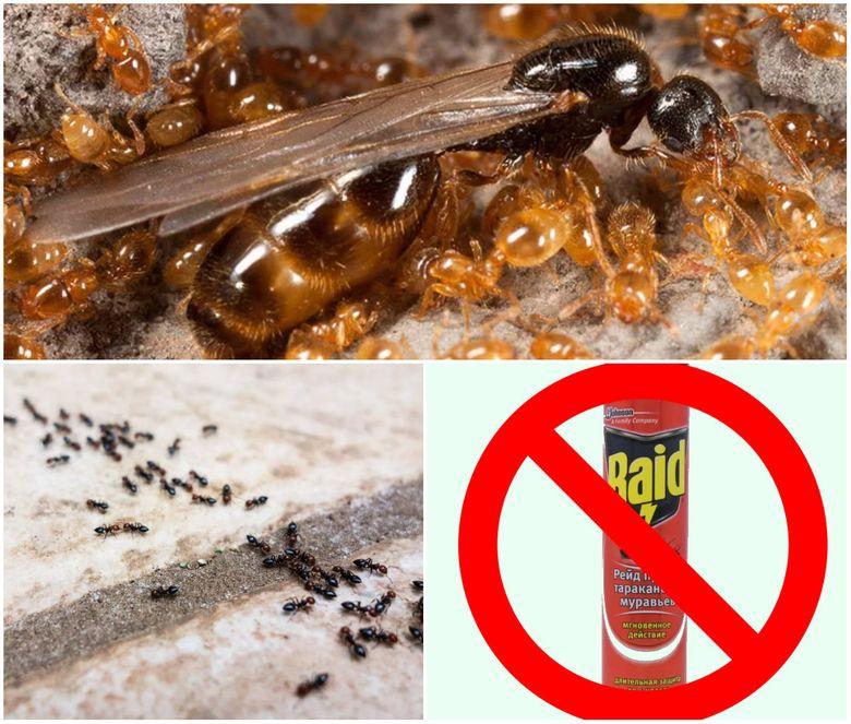 самостоятельного выведения муравьев