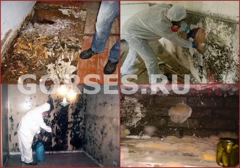 грибок в подвале