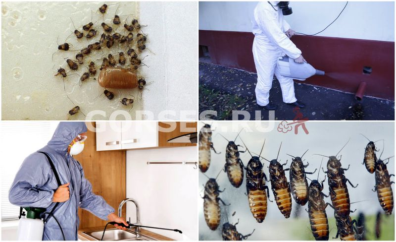 профилактические меры от тараканов