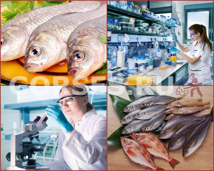 проверка рыбы