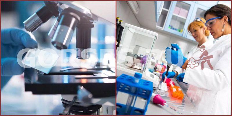 Химический и органолептический анализ Софрино