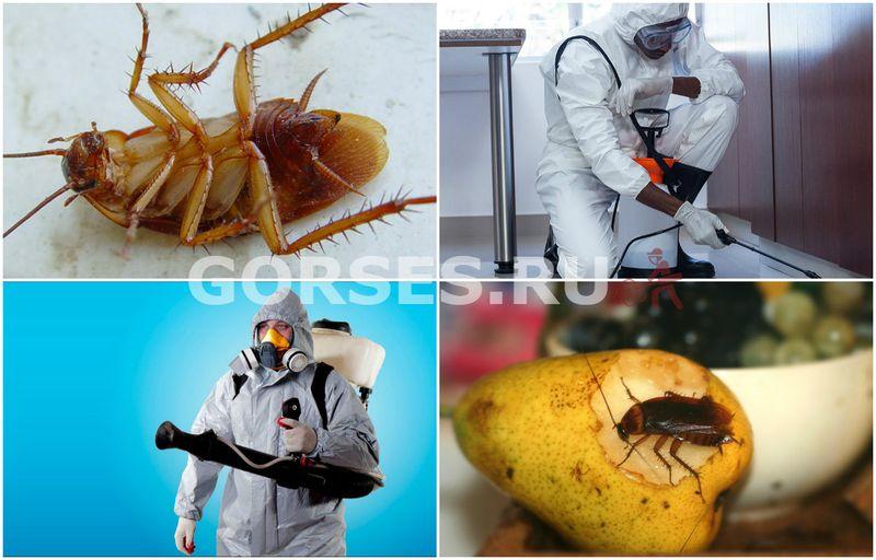 магазинные насекомые