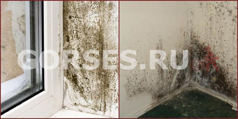 Зоны поражения в доме и квартире