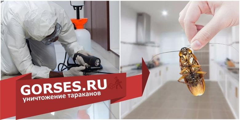 Обработка от тараканов в Обнинске