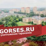 Уничтожение тараканов в Голицыно