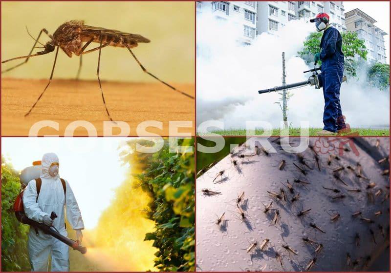 обработка дачного участка от комаров
